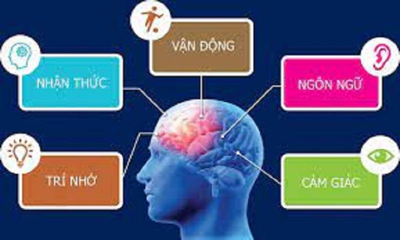 Bức xạ điện từ gây ảnh hưởng đến não bộ của con người