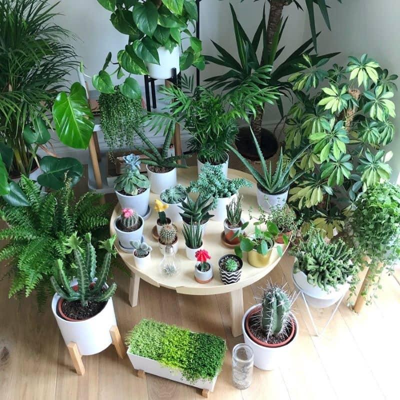 Các điều cần tránh khi chọn cây trong nhà
