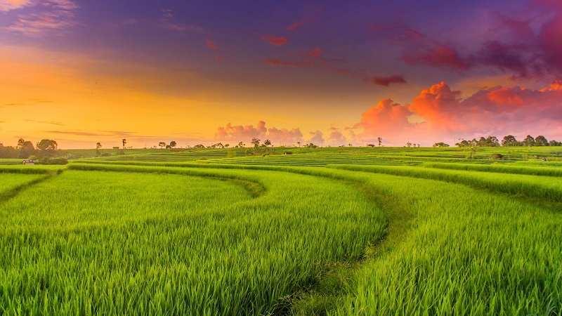 Đất HNK để trồng lúa nước