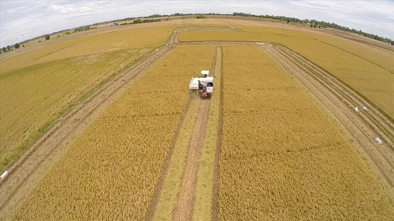 Đất nông nghiệp có được cấp giấy chứng nhận quyền sử dụng đất không?