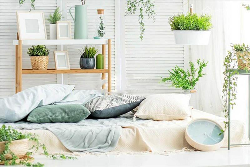 Để nhiều cây xanh trong phòng ngủ sẽ khiến cho sức khỏe của gia chủ bị tổn hại