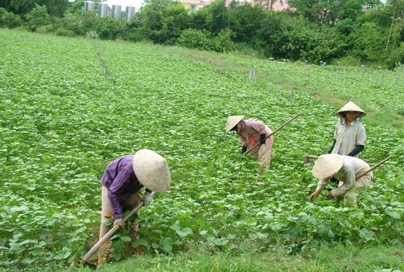 Hạn mức giao đất với những cây trồng hàng năm, đất nuôi trồng thủy hải sản, đất để làm muối