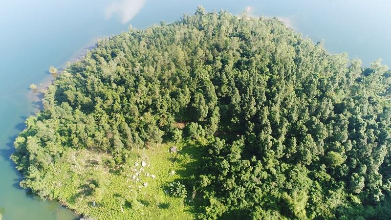 Hạn mức giao đối với đất rừng phòng hộ