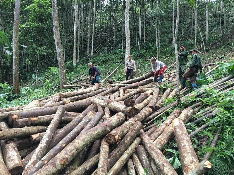 Lợi ích của rừng trồng