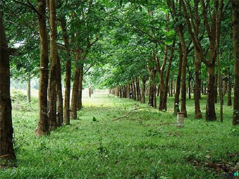 Nêu định nghĩa cụ thể về đất CLN là gì