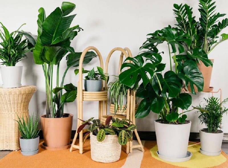 Tại sao nên trồng cây xanh trong nhà?