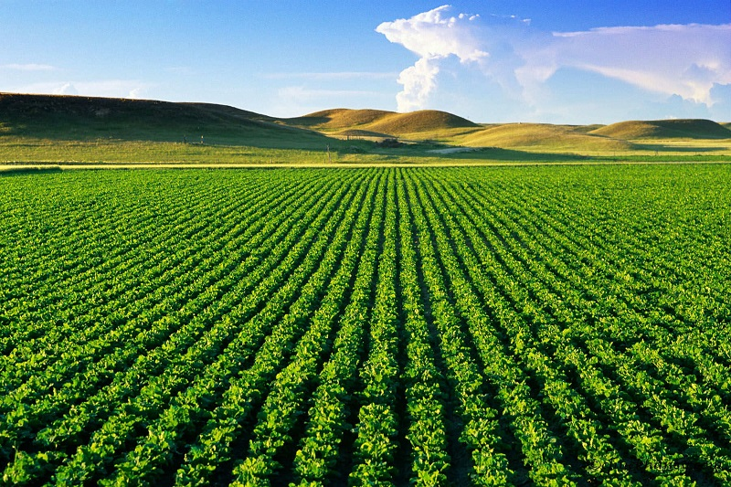 Thủ tục, hồ sơ xin gia hạn quyền sử dụng đất nông nghiệp