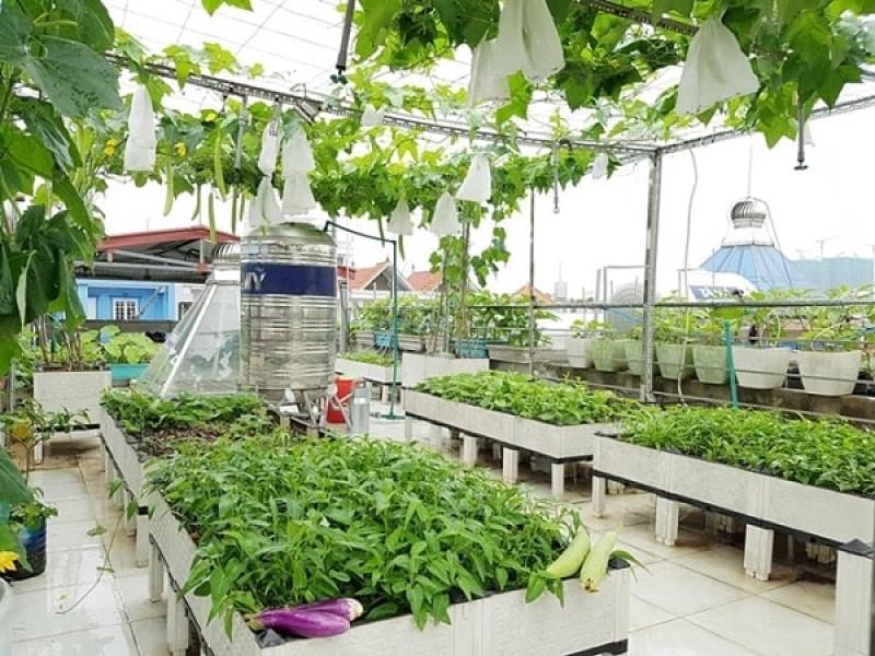 Trồng vườn rau trên sân thượng
